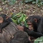 https://roadlesstraveled.smugmug.com/Website-Photos/Website-Galleries/Ross-uganda/i-L2K3dfB