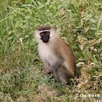 https://roadlesstraveled.smugmug.com/Website-Photos/Website-Galleries/Ross-uganda/i-Lzc7rDW