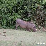 https://roadlesstraveled.smugmug.com/Website-Photos/Website-Galleries/Ross-uganda/i-NSBG2mp
