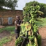 https://roadlesstraveled.smugmug.com/Website-Photos/Website-Galleries/Ross-uganda/i-Q4MC7t9