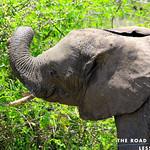 https://roadlesstraveled.smugmug.com/Website-Photos/Website-Galleries/Ross-uganda/i-QDzcvv9
