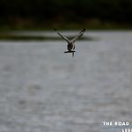 https://roadlesstraveled.smugmug.com/Website-Photos/Website-Galleries/Ross-uganda/i-QGxZLHD