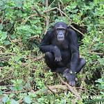 https://roadlesstraveled.smugmug.com/Website-Photos/Website-Galleries/Ross-uganda/i-QZHfKLR