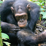 https://roadlesstraveled.smugmug.com/Website-Photos/Website-Galleries/Ross-uganda/i-RdfVwcW
