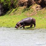 https://roadlesstraveled.smugmug.com/Website-Photos/Website-Galleries/Ross-uganda/i-T2Wj9PK