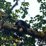 https://roadlesstraveled.smugmug.com/Website-Photos/Website-Galleries/Ross-uganda/i-T8mXhNX