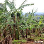 https://roadlesstraveled.smugmug.com/Website-Photos/Website-Galleries/Ross-uganda/i-XTzCkzx