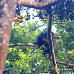 https://roadlesstraveled.smugmug.com/Website-Photos/Website-Galleries/Ross-uganda/i-ZZmz9Qc