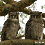 https://roadlesstraveled.smugmug.com/Website-Photos/Website-Galleries/Ross-uganda/i-c7rnT4M