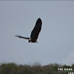 https://roadlesstraveled.smugmug.com/Website-Photos/Website-Galleries/Ross-uganda/i-dW38v4S