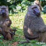 https://roadlesstraveled.smugmug.com/Website-Photos/Website-Galleries/Ross-uganda/i-fFjKTz7