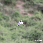 https://roadlesstraveled.smugmug.com/Website-Photos/Website-Galleries/Ross-uganda/i-fw47fBZ