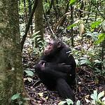 https://roadlesstraveled.smugmug.com/Website-Photos/Website-Galleries/Ross-uganda/i-hgVjRVT