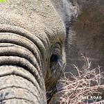 https://roadlesstraveled.smugmug.com/Website-Photos/Website-Galleries/Ross-uganda/i-mMTJtdv
