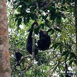 https://roadlesstraveled.smugmug.com/Website-Photos/Website-Galleries/Ross-uganda/i-qMGc668