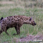 https://roadlesstraveled.smugmug.com/Website-Photos/Website-Galleries/Ross-uganda/i-wNrPqp7