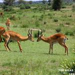 https://roadlesstraveled.smugmug.com/Website-Photos/Website-Galleries/Ross-uganda/i-wTVL6fN