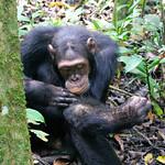https://roadlesstraveled.smugmug.com/Website-Photos/Website-Galleries/Ross-uganda/i-wrj4sFb