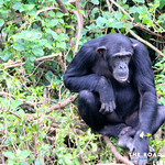 https://roadlesstraveled.smugmug.com/Website-Photos/Website-Galleries/Ross-uganda/i-zGTZTsT