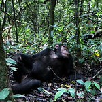 https://roadlesstraveled.smugmug.com/Website-Photos/Website-Galleries/Ross-uganda/i-zM3zsdq