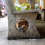 https://roadlesstraveled.smugmug.com/Website-Photos/Website-Galleries/Thailand/i-3nThkxQ