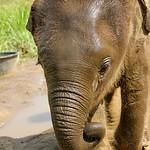 https://roadlesstraveled.smugmug.com/Website-Photos/Website-Galleries/Thailand/i-5pT6QgL