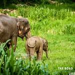 https://roadlesstraveled.smugmug.com/Website-Photos/Website-Galleries/Thailand/i-RxWS27d