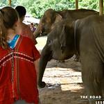 https://roadlesstraveled.smugmug.com/Website-Photos/Website-Galleries/Thailand/i-TDsswQB