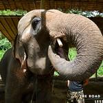 https://roadlesstraveled.smugmug.com/Website-Photos/Website-Galleries/Thailand/i-hDV7S9N