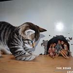 https://roadlesstraveled.smugmug.com/Website-Photos/Website-Galleries/Thailand/i-jsS757Z