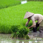 https://roadlesstraveled.smugmug.com/Website-Photos/Website-Galleries/Thailand/i-kL8Srfx