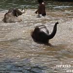 https://roadlesstraveled.smugmug.com/Website-Photos/Website-Galleries/Thailand/i-tJHmMwX
