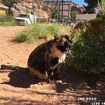 https://roadlesstraveled.smugmug.com/Website-Photos/Website-Galleries/Utah-Unleashed/i-4zFrKxg