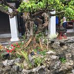 https://roadlesstraveled.smugmug.com/Website-Photos/Website-Galleries/Vietnam/i-2p3KWrp