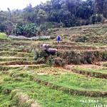 https://roadlesstraveled.smugmug.com/Website-Photos/Website-Galleries/Vietnam/i-7VB4pVD