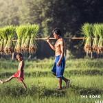 https://roadlesstraveled.smugmug.com/Website-Photos/Website-Galleries/Vietnam/i-GdsgdTM