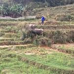 https://roadlesstraveled.smugmug.com/Website-Photos/Website-Galleries/Vietnam/i-kQxSMsP