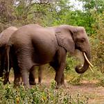 https://roadlesstraveled.smugmug.com/Website-Photos/Website-Galleries/Watermarked-Africa-Tanzania-/i-3WKbRpC