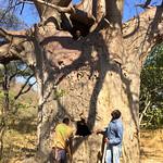https://roadlesstraveled.smugmug.com/Website-Photos/Website-Galleries/Watermarked-Africa-Tanzania-/i-5c4D8gS