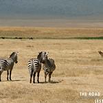https://roadlesstraveled.smugmug.com/Website-Photos/Website-Galleries/Watermarked-Africa-Tanzania-/i-75Mf6GG
