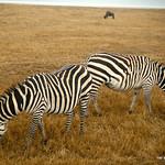 https://roadlesstraveled.smugmug.com/Website-Photos/Website-Galleries/Watermarked-Africa-Tanzania-/i-7KqdHHd
