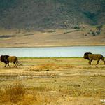 https://roadlesstraveled.smugmug.com/Website-Photos/Website-Galleries/Watermarked-Africa-Tanzania-/i-BLmB5Q5