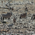 https://roadlesstraveled.smugmug.com/Website-Photos/Website-Galleries/Watermarked-Africa-Tanzania-/i-DQsmr7v