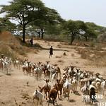 https://roadlesstraveled.smugmug.com/Website-Photos/Website-Galleries/Watermarked-Africa-Tanzania-/i-FrGzMnk