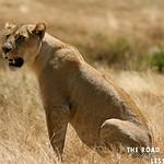 https://roadlesstraveled.smugmug.com/Website-Photos/Website-Galleries/Watermarked-Africa-Tanzania-/i-GS6hpRw