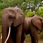 https://roadlesstraveled.smugmug.com/Website-Photos/Website-Galleries/Watermarked-Africa-Tanzania-/i-HK6XnXF