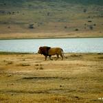 https://roadlesstraveled.smugmug.com/Website-Photos/Website-Galleries/Watermarked-Africa-Tanzania-/i-Jm74pVm