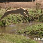 https://roadlesstraveled.smugmug.com/Website-Photos/Website-Galleries/Watermarked-Africa-Tanzania-/i-TSQS98S