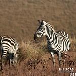 https://roadlesstraveled.smugmug.com/Website-Photos/Website-Galleries/Watermarked-Africa-Tanzania-/i-TpVGvWm