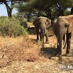 https://roadlesstraveled.smugmug.com/Website-Photos/Website-Galleries/Watermarked-Africa-Tanzania-/i-VHnR4PF